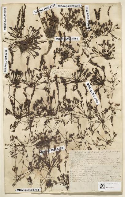 Herbier Lefrou - échantillons de plantes datant des années 1830 - Cour-Cheverny