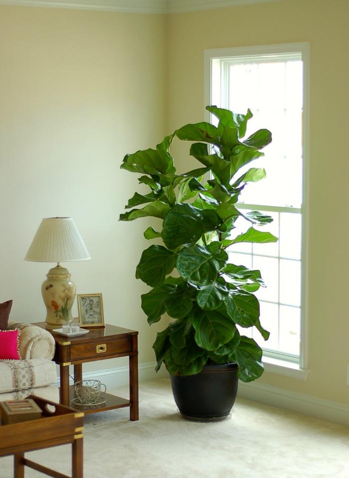 Plantas Decorativas Para Interiores Cool With Plantas Decorativas Para Interiores Plantas Para Decoracao De Interiores Plantas Artificiais