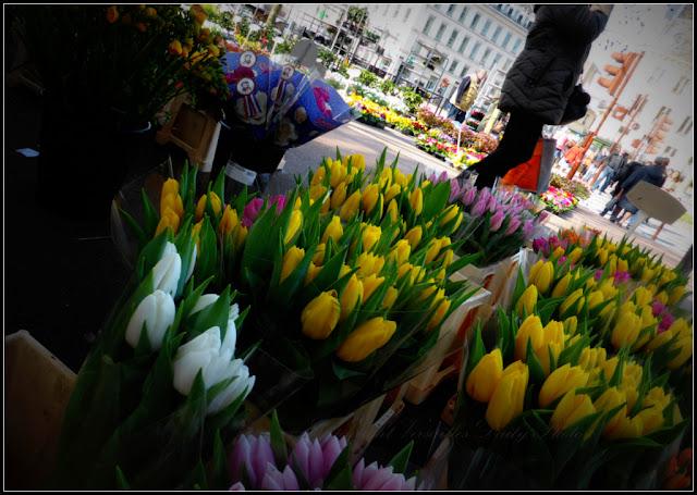 Tulips flower market Versailles