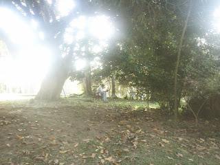 festival das cerejeiras parque do carmo