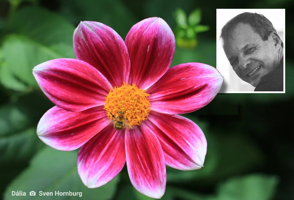 literatura paraibana poesia cronica flores cronica clovis roberto