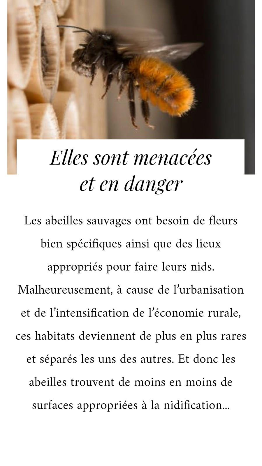 abeilles-sauvages-en-danger