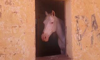 Cavalo criado em casa abandonada em Nova Floresta chama atenção por observar pessoas pela janela