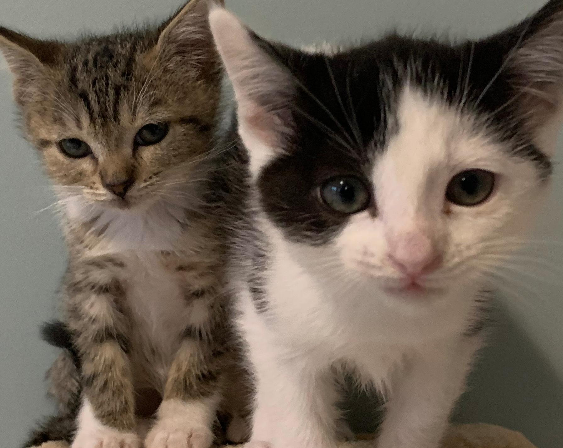 adotar gatos na irlanda, adotar pets na irlanda, adotar gatos em dublin