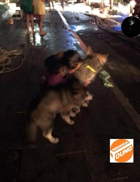 chú chó cứu chủ vụ cháy chung cư 13 người chết
