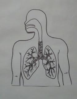 como hacer un sistema respiratorio casero