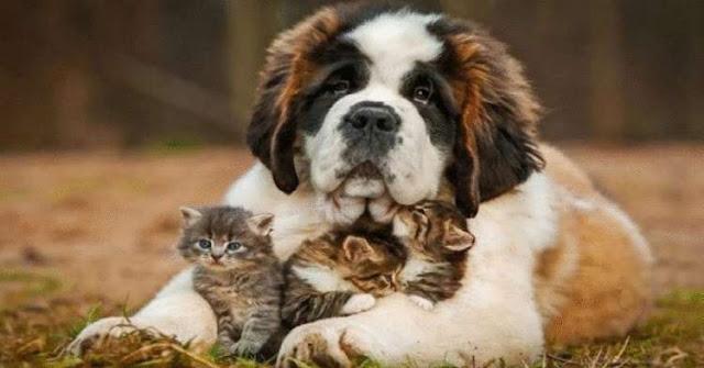 10 пород собак, которые считаются самыми добрыми в мире!