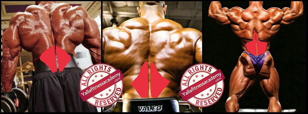 تشريح عضلة الظهر و كيفية إستهداف أجزائها