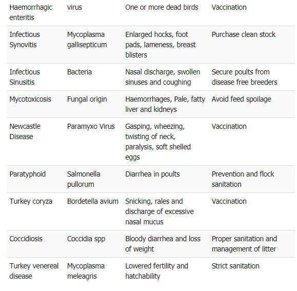 Common Diseases of Turkey