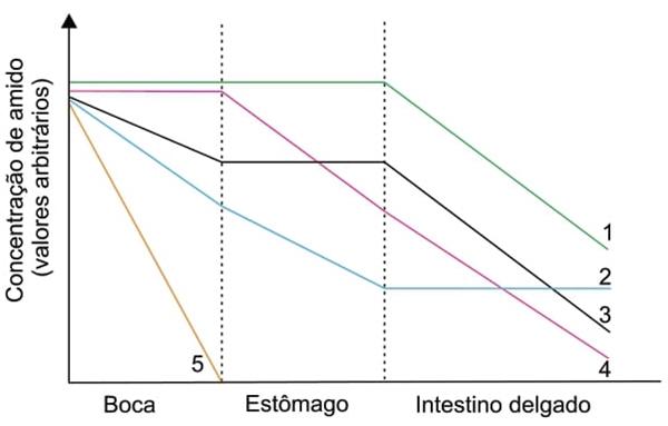 O gráfico ilustra possíveis alterações na concentração do amido ao longo do tubo digestório.