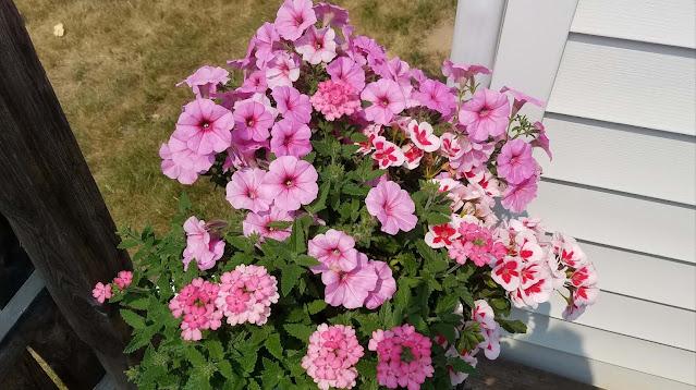 Photo of deck planters