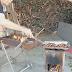 Κάστανα σουβλιστά τηγανιτά βραστά