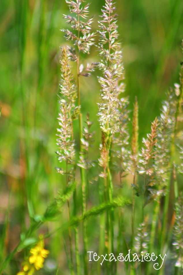 Grasses from Angel Fire New Mexico
