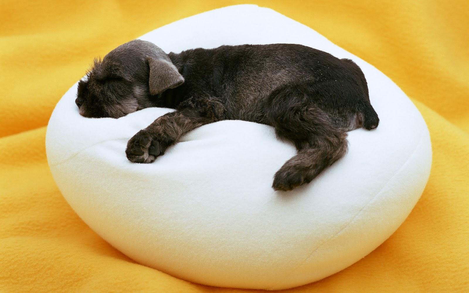 Mooie honden achtergrond met een puppy lekker een het slapen op een zitkussen