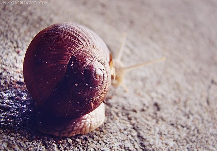 ślimak, snail, bokeh, makro, makrofotografia, macrophotography