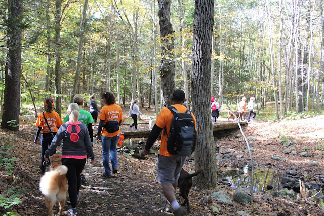 Group of dog lovers hiking the Pequot Trails Lantern Hill Summit #Walktober The Last Green Valley