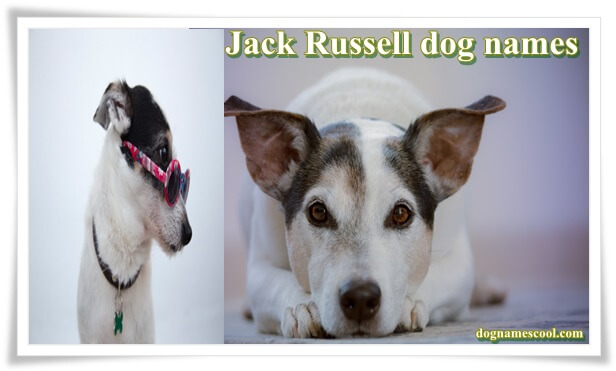 Jack Russell dog names