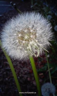 Flor encendida