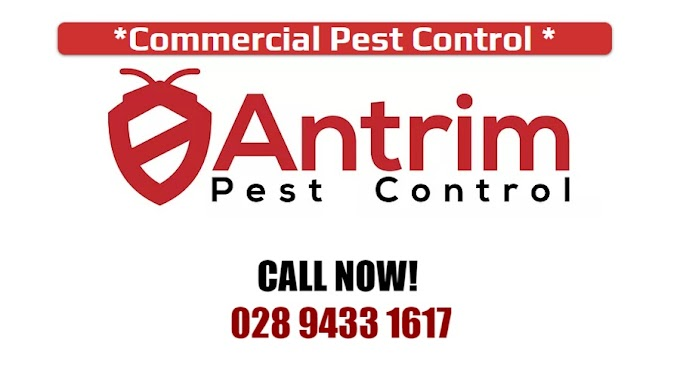 Pest Control Newtownabbey | Antrim Pest Control