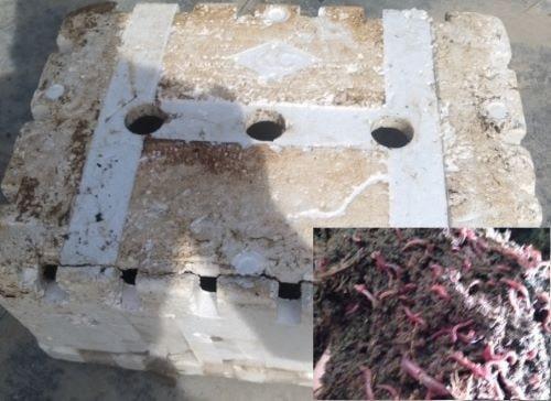 Trùn quế Bình Định: 20kg trùn quế giống về cùng em Huy