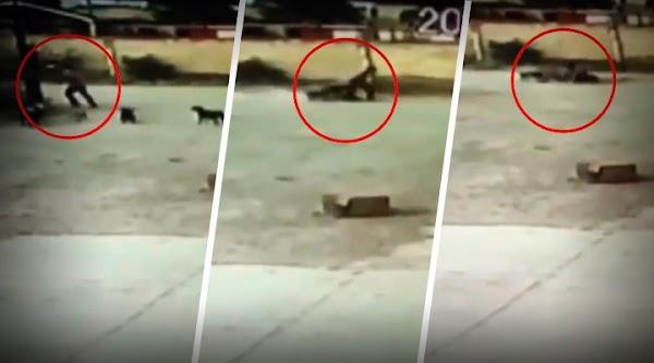 Captan momento en que perros matan a hombre en Durango; lomitos serán sacrificados