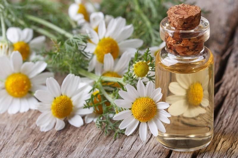 7 Benefícios do Óleo Essencial de Camomila Para a Saúde e Como Usá-lo