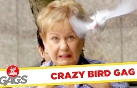 Funny Video – Birds Attacking People – Just For Laughs Gags