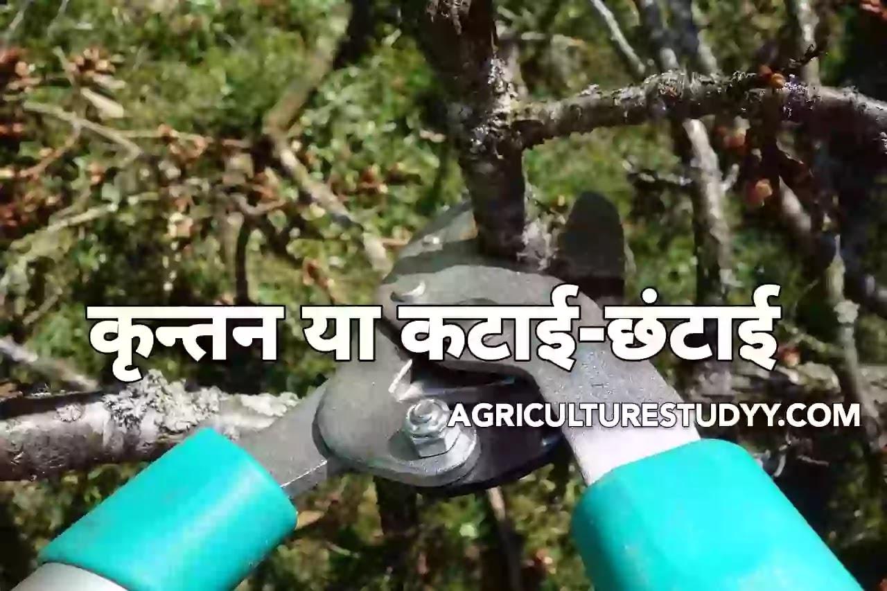 कृन्तन किसे कहते है, उद्देश्य, प्रकार, नियम एवं कृन्तन करने का समय व औजार ( What is Pruning, purpose, type, rules and time and tools of Pruning ), Pruning in hindi