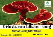 Reishi Mushroom Training | Ganoderma Mushroom Training | 17-19 July 2020