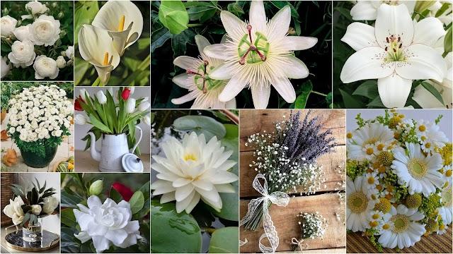 11 Καλλωπιστικά φυτά με εντυπωσιακά Λευκά λουλούδια