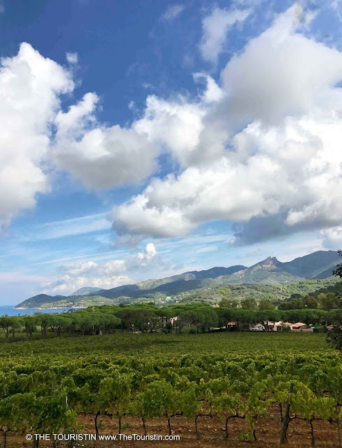 A vineyard under a big blue sky with white fluffy clouds and a mountain range by the sea in the distance.