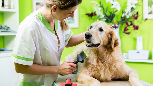 ways to control golden retriever excessive shedding
