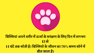 बिल्लियों के बारे मे अनसुनी और रोचक बातें । Amazing Facts about Cat In Hindi |, cat facts in hindi, facts about cat, pussy in hindi, pussy facts in hindi