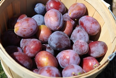 basket of prunes