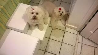 escadas para cães multipla