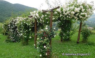 pergolato di rose nel giardino della fattoria didattica dell ortica a Savigno Valsamoggia Bologna vicino Zocca appennino
