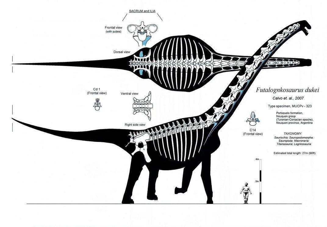 Los 40 Datos Sobre de el Futalognkosaurus