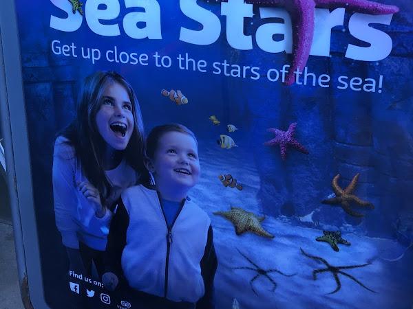 Sea Stars At Sea Life, Blackpool