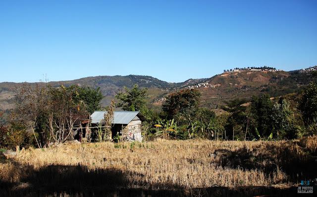 terrace-paddy-field-photo-nagaland