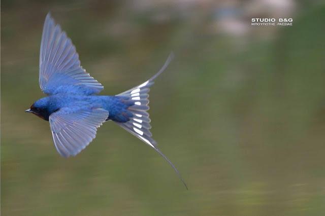 21η Μαΐου: Ευρωπαϊκή Ημέρα Natura 2000