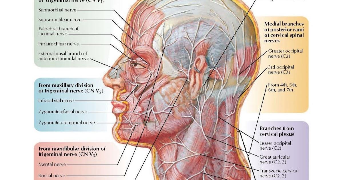 pediagenosis