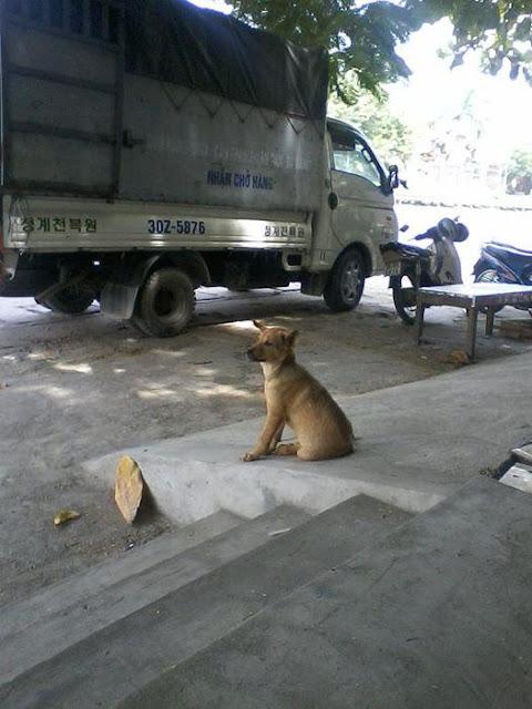 Câu chuyện về chú chó nhút nhát bị chủ nuôi để thịt sẽ khiến bạn cay mắt