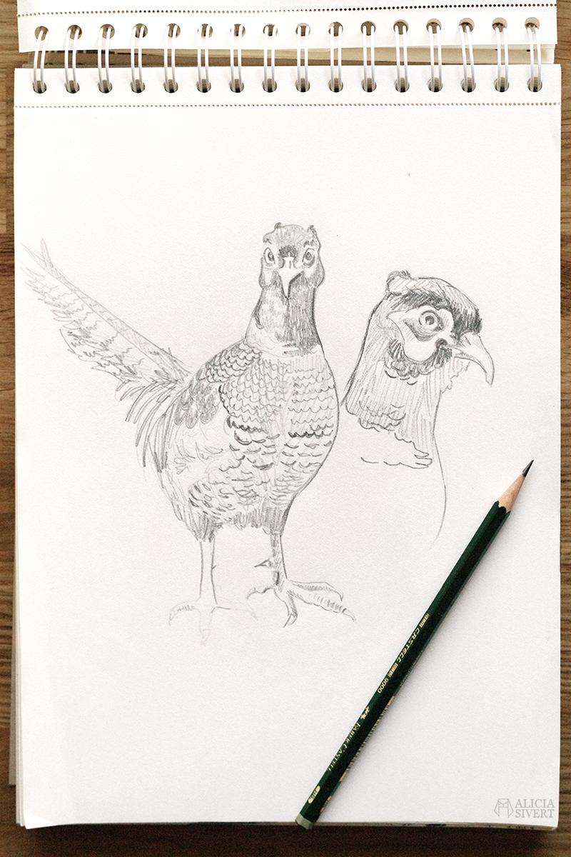 aliciasivert alicia sivert sivertsson konst teckning teckningar skiss skisser rita fasan fågel illustration skapande
