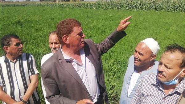 لأول مرة.. زراعة محصول الأرز بالتنقيط بقرية علقام في كوم حماده
