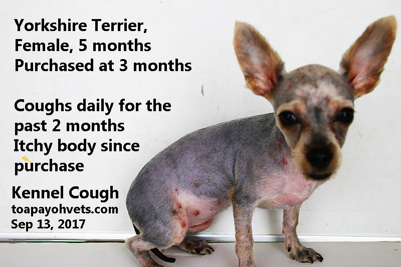 Veterinary And Travel Stories Intern An Unusual Case A 5 Month Old