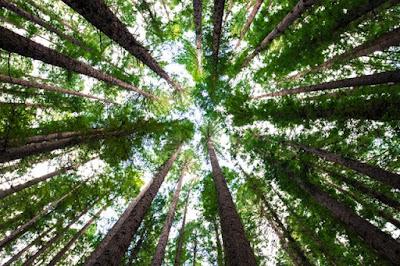 filosofi pohon