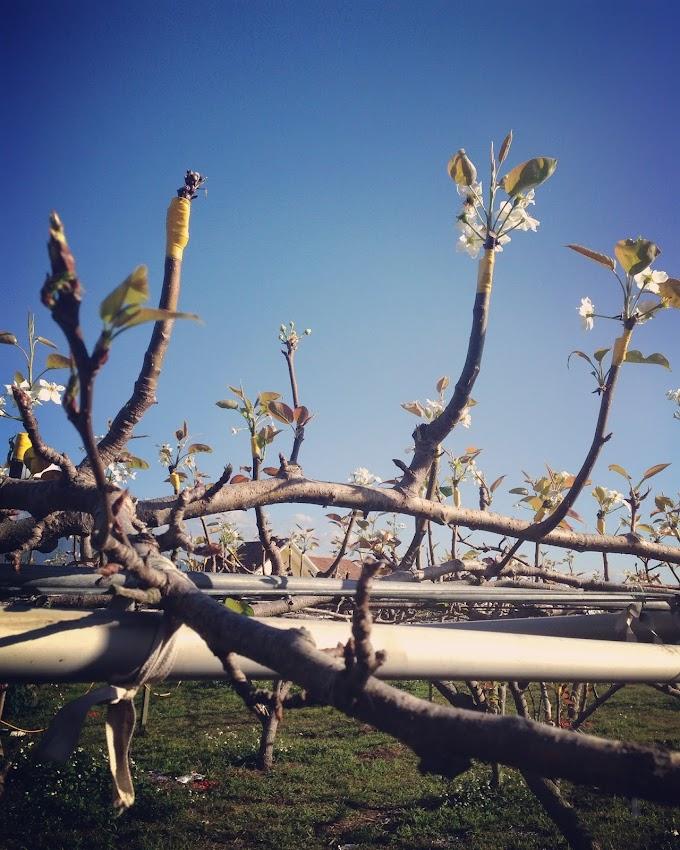苗栗卓蘭 採摘小番茄初體驗 荳媽媽觀光農園 (壢西坪休閒農業區)天氣超好-張傑克