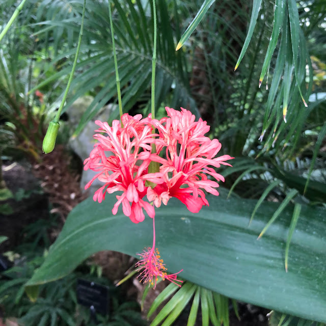 Brilliant blooms delight at the Oak Park Conservatory