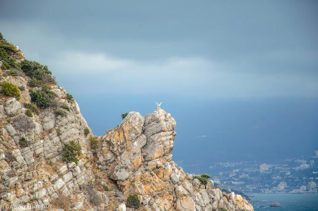Белый орел на скале Крым