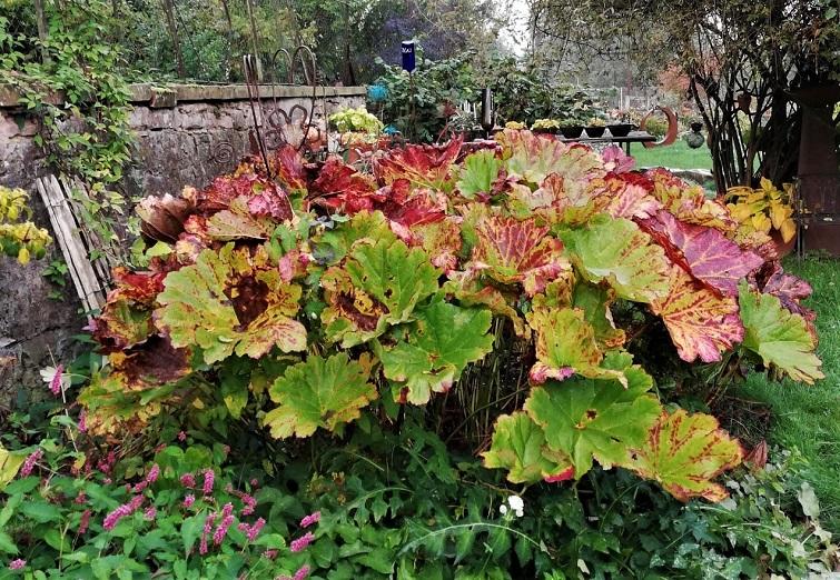 Gartendeko mit Großpflanzen